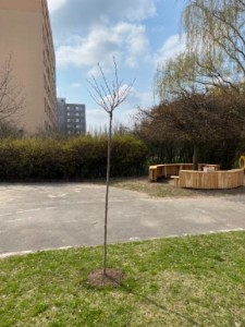 zahrada 5